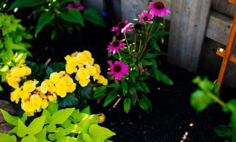 plantingandgardens_6_2